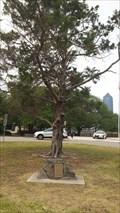 Image for Sesquicentennial Christmas Tree - Friendship Park - Jacksonville, FL