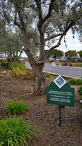 Image for Drought Resistant Garden - Livermore, CA