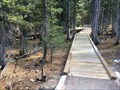 Image for Island Forest Trail Boardwalk - Great Basin National Park - Nevada