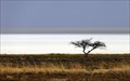 Image for Etosha Pan - Etosha National Park - Namibia