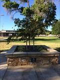 Image for Community Tree - Los Banos, CA