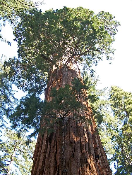 Giant Sequoia National Monument, California - Northern Part ...