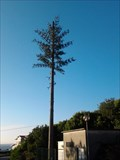 Image for Cell Tower tree - Caminha, Portugal