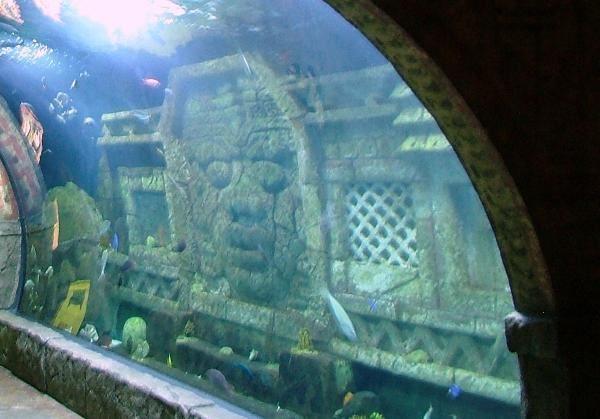 Tourism Downtown Aquarium Houston Texas Official
