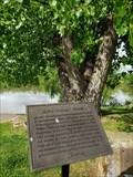 Image for Lewis and Clark Cottonwood Tree - Vanceburg, Kentucky