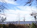 Image for The Trampled Track Trail Overlook - Olustee, FL