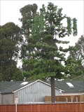 Image for Unknown Tree? Pinole,CA