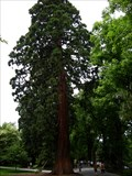 Image for Mainau Island Arboretum - Lake Constance, Germany