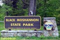 Image for Black Moshannon State Park - Philipsburg, Pennsylvania