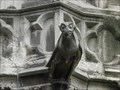 "Image for Notre Dame Cathedral Gargoyles - ""Sunday Strip"" - Paris, France"
