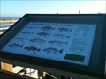 Image for Pier Fishing in Southern California - Newport Beach, CA