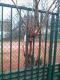 Image for Tree Eating Fence, Praha, Kunetická