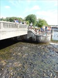 Image for Feed the Carp - Linesville Spillway - Linesville, PA