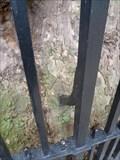 Image for Fence eating tree - London, UK