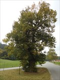 Image for Exceptional Tree - Sloup, Czech Republic