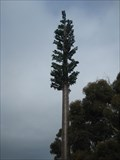 Image for Pine Tree Phone Tower - Rhyll, Phillip Island, Victoria