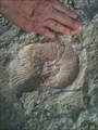 Image for Benbrook Lake Fossil Site - Benbrook, TX, US