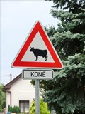 Image for Horse or cow - Hlusice, Czech Republic