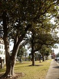 Image for Columbus Courthouse Magnolia Trees - Columbus, TX