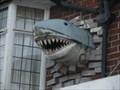 "Image for Shark - ""Hidden Diving"" Scuba Diving Centre, Birmingham, England"