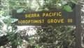 Image for Sierra Pacific Soroptimist Grove III - Big Basin Redwoods State Park, CA