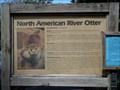 Image for North American River Otter  -  Davie, FL