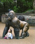 Image for Lowland Gorilla - St. Louis Zoo - St. Louis, MO