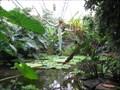 Image for The Living Rainforest - Hampstead Norreys, Berkshire, UK