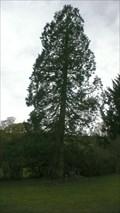Image for Esthwaite Lodge Redwood tree, Hawkshead, Cumbria