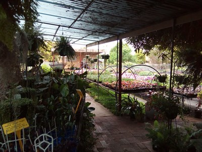 Looking back to the greenhouse area.