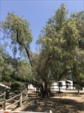 Image for Heritage Hill Historical Park Tree - Lake Forest, CA