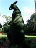 Image for Kangaroo - Topiarie - Busch Gardens, Tampa Bay, Florida.