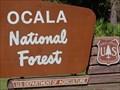 Image for Florida Black Bear Scenic Highway - Ocala National Forest - Altoona, Florida.