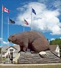 Image for Beaver - Beaverlodge, Alberta