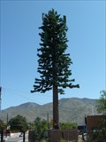 Image for Pine Tree Tower - Albuquerque, New Mexico