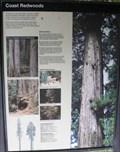 Image for Coast Redwoods - California