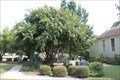 Image for Eola Hicks - Denton, TX