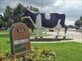 Image for Dairy Cows - Sulphur Springs, TX
