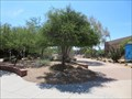 Image for Texas Ebony Tree, Tempe Public Library Plaza - Tempe, Arizona
