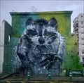 Image for Racoon - Lisbon, Portugal