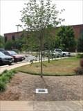 Image for Patriotic Tree - Inova Fair Oaks (VA) Hospital