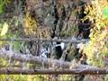 Image for Rose River Falls, Shenandoah National Park
