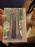 Image for The Auto Tree - Boulder Creek, CA