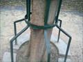 Image for Iron Eating Tree - Torres Novas