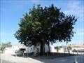 Image for arbre de la liberte - Marsilly,France