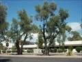 Image for Winfield Scott's Olive Tree - Scottsdale, Arizona