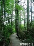 Image for Cranberry Glades Botanical Area - Monongahela National Forest - Hillsboro, West Virginia