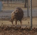 Image for Lions at Maddox Playground -- Childress TX