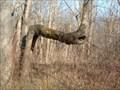 Image for Mississinewa Trail Tree
