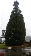 Image for Tallest Tree - Bad Breisig - RLP - Germany